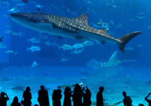 「水族館」!ジンベイがすごかった。もう30歳オーバ!